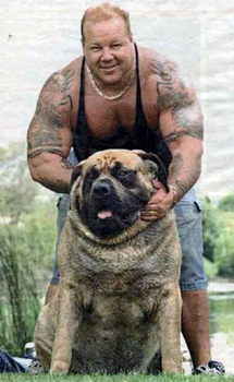 "Is the ""Hercules the World's Biggest Dog"" photo fake, as ..."