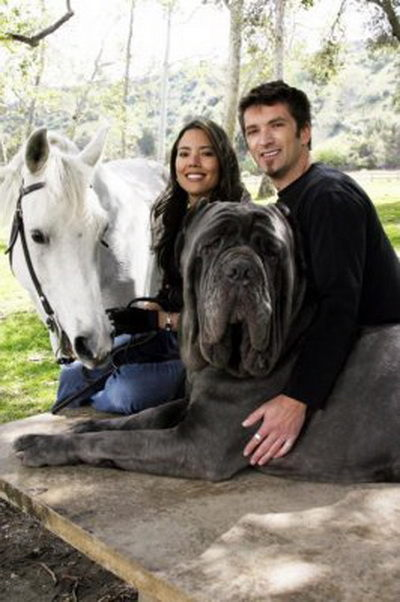 """Is the """"Hercules the World's Biggest Dog"""" photo fake, as ..."""